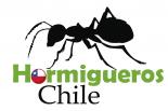 Hormigueros Chile